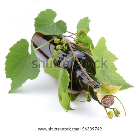 Bottle of wine in the vine on a white background - stock photo