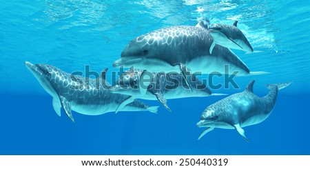 Bottlenose Dolphin - Bottlenose dolphins live in a group called pods and forage the ocean for fish prey. - stock photo