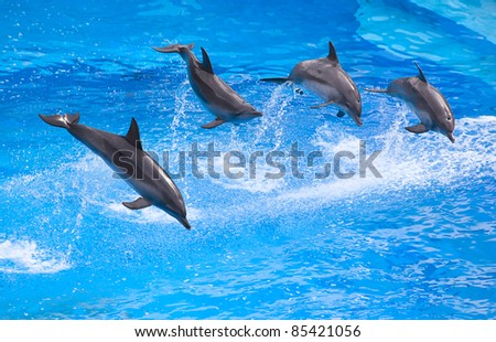 Bottlenose dolphin in the aquarium show - stock photo