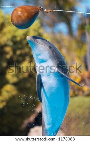 Bottlenose dolphin jump - stock photo