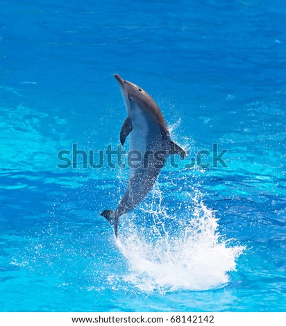 Bottlenose dolphin jumping high from bue water - stock photo