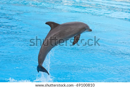 Bottlenose dolphin jumping in the aquarium show - stock photo