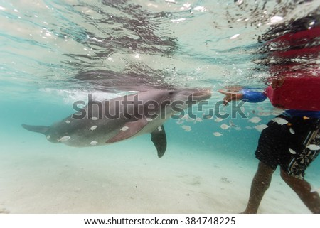 Bottlenose dolphin plays with swimmer in Caribbean as school of fish swims nearby