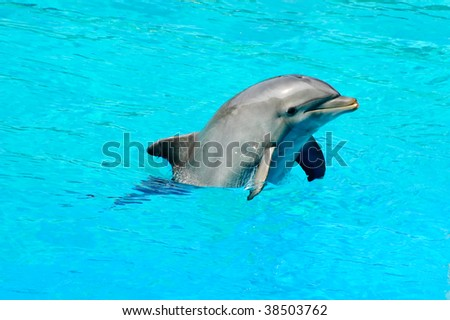 Bottlenose dolphin swimming in an aquarium pool.