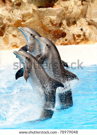 Bottlenose Dolphins performing tail stands in a show - stock photo