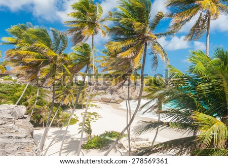 Bottom Bay is one of the most beautiful beaches on the Caribbean island of Barbados. It is a tropical paradise with palms hanging over turquoise sea - stock photo
