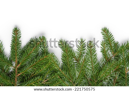 bottom border from fir twigs, christmas decoration white background - stock photo