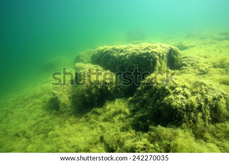 Bottom of freshwater lake covered with algae - stock photo