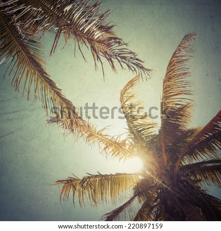 Bottom view of coconut trees - stock photo