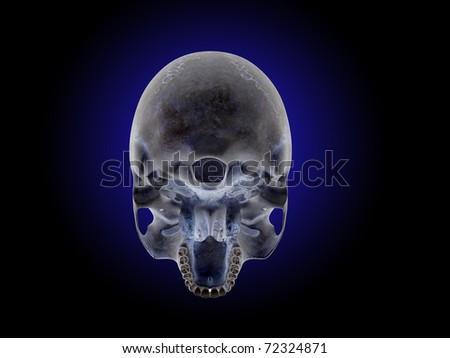 Bottom View of Skull - stock photo