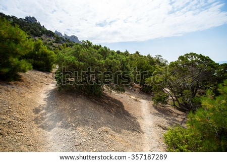 Bottom view on a bushes on a background of sky near the settlement of the Novyi Svit in the Crimea in the summer