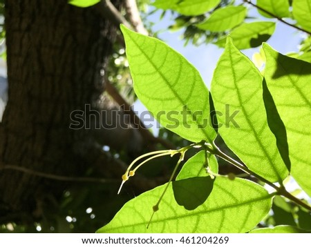 Bottom view silhouette fresh green leaves and leaflet texture with tree and sky background