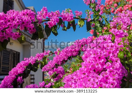 Bougainvillea and Idyllic view of South houses - stock photo