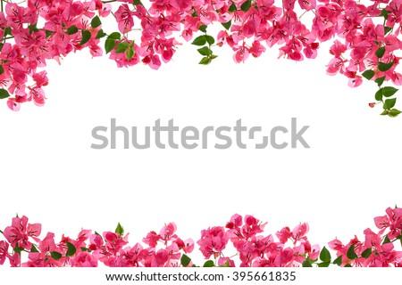 Bougainvillea flower frame on white background ,Provincial flower of phuket thailand,beautiful flower frame for background product - stock photo