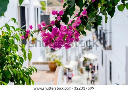 Bougainvillea in the streets of Frigiliana, Malaga, Spain - stock photo