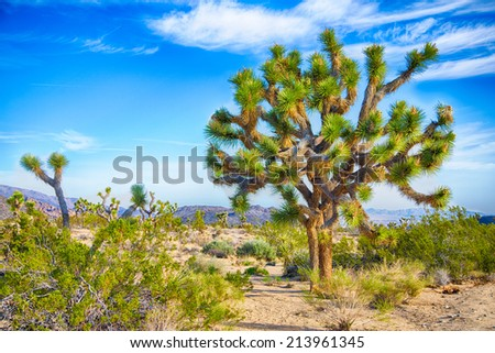 Boulders and Joshua Trees in Joshua Tree National Park, California. - stock photo