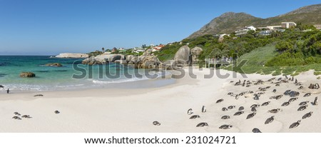 Boulders Beach Nature Reserve, near Cape Town, Western Cape, South Africa. Home of crystal clear water and penguins. Prime tourist destination - stock photo