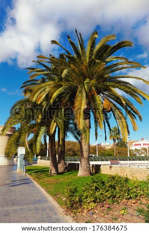 boulevard with palm trees against blue sky and cloud - stock photo