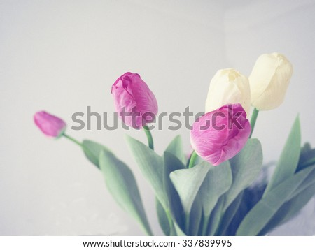 Bouqet of red anr white tulips - stock photo