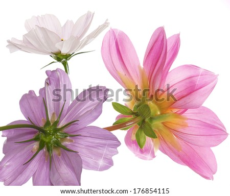 Bouquet Blooming Garden Flower on white background