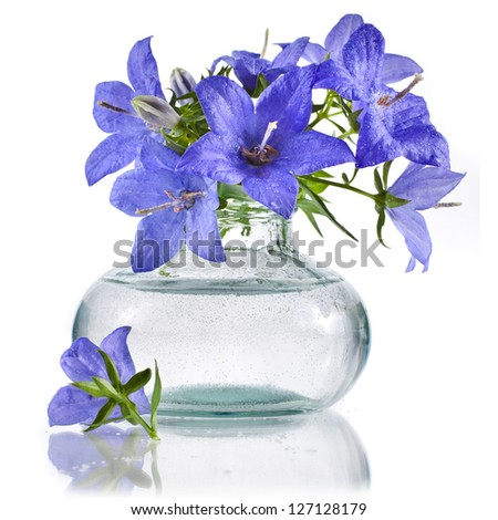bouquet bunch of blue  campanula flowers in glass bottle  isolated on white background - stock photo