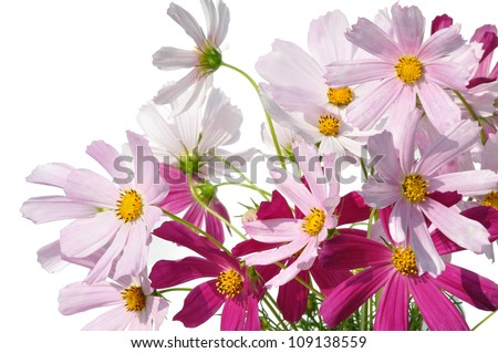 bouquet flower field on white background