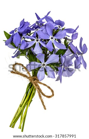 Bouquet from flowers phlox, isolated on white background - stock photo