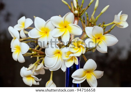 Bouquet from Frangipani, Plumeria in a blue vase. - stock photo