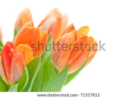 Bouquet from orange tulips on a white background