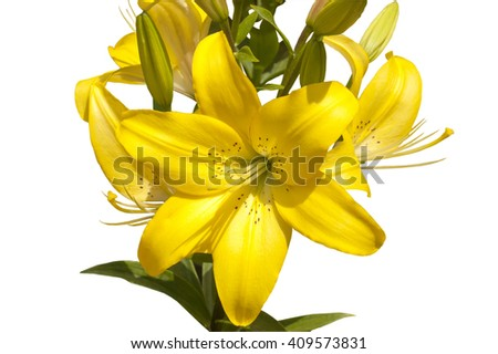 bouquet from the yellow lilies isolated on a white background - stock photo