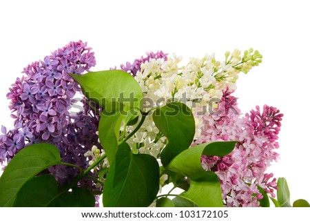Bouquet from varicolored lilac isolated on white - stock photo