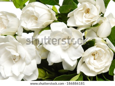 bouquet gardenia plant - stock photo