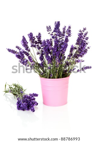 Bouquet lavender in pot over white background