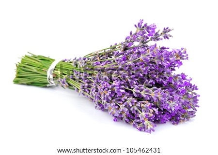 Bouquet of a fragrant lavender on a white background - stock photo