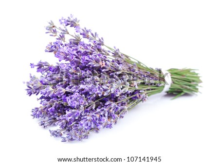 Bouquet of a fragrant lavenders on a white background - stock photo
