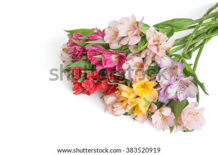 Bouquet of alstroemeria different colors isolated on white background