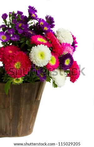bouquet of aster flowers in pot  isolated on white background