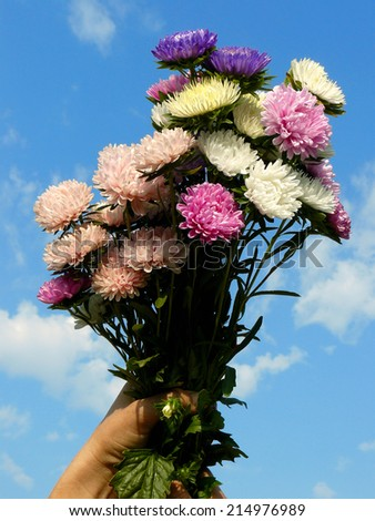 bouquet of asters against blue sky background - stock photo