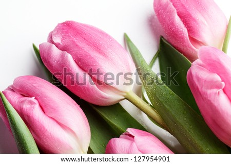 Bouquet of beautiful bright pink tulips with water drops