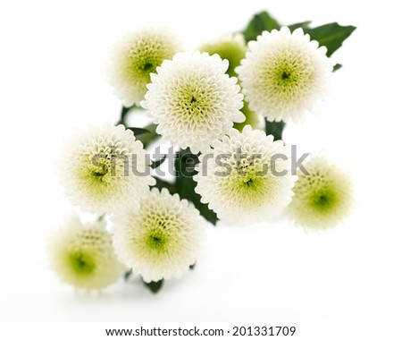 Bouquet of beautiful chrysanthemums on white background - stock photo