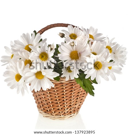 bouquet of beautiful daisies flowers in a basket isolated on a white background - stock photo