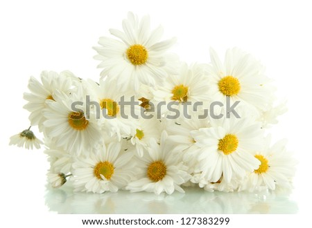 bouquet of beautiful daisies flowers, isolated on white - stock photo