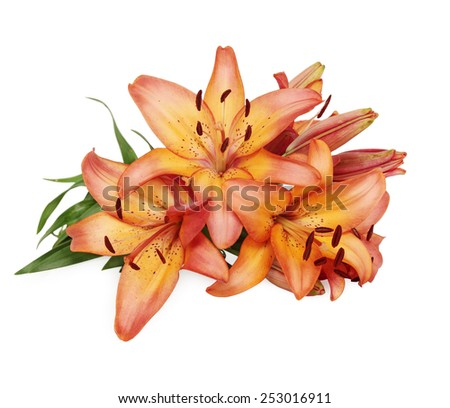 bouquet of beautiful flowers, daylily on a white background - stock photo