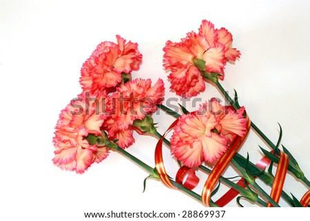 Bouquet of beautiful pink carnations on a white background