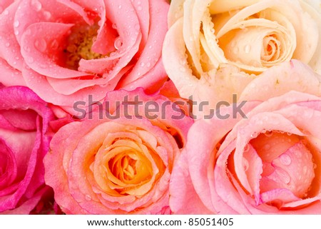 Bouquet of beautiful roses isolated on white - stock photo