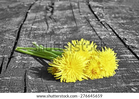 Bouquet of blooming dandelions on a wooden board - stock photo