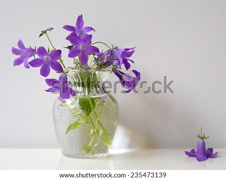 Bouquet of bluebells flower in a glass vase. Campanula still life. Floral decoration. - stock photo