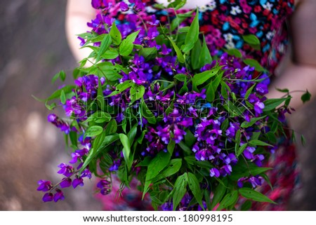 Bouquet of bluebells in the hands of women - stock photo