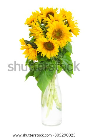 bouquet of bright sunflowers in bottle isolated on whute  - stock photo