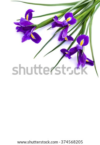 Bouquet of bulbous iris (commonly known: Iris xiphium, Spanish Iris, Small Bulbous-rooted Iris)  on white background with space for text. - stock photo